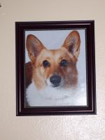 Framed Picture of my Pembroke Corgi on the Wall by KrazyKari