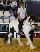STOCK - 2014 Total Equine Expo-61 by fillyrox