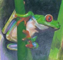 tree frog by dstroh