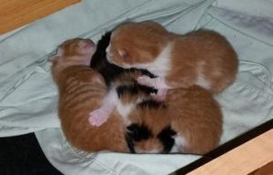 Kittens In The Drawer by MegBeth