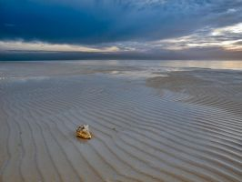 Rise of the conch shell by peterpateman