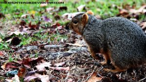 Photo Fridays- Squirrel by TheXHunter08