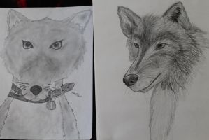 Dog art progression by Shadowstep990