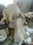 Woolly Mammoth skull WIP 2 by Waspdrake