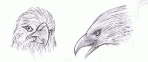 Eagles Charcoal by Nyra992