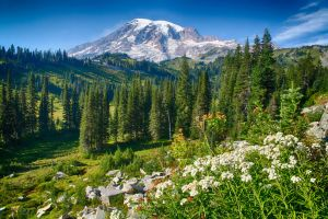 Mount Rainier 11 by arnaudperret