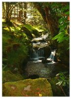 Tranquil Stream by Forestina-Fotos