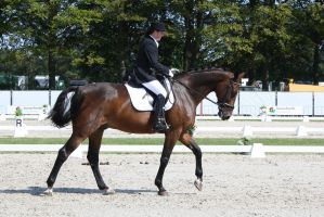 Outdoor Brabant Stock 40 by chronically