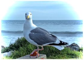 The Seagull Has Landed by TeaPhotography