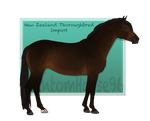 FSS Foreign Hill, NZTB - Import #27 by PhantomHorse96