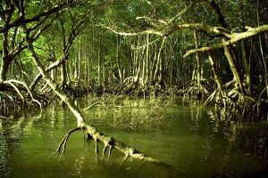 Mangrove by s9