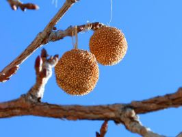 My Balls Hang Low by Tulpi