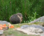 Rainy day for the baby marmot by MorganeS-Photographe