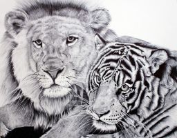 Big Cats by shelleysupernova