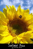 Sunflower Buzz by Unchecked