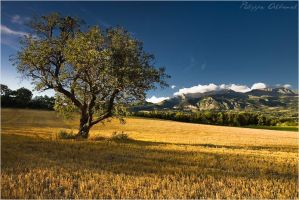 Charm from Provence by Philippe-Albanel
