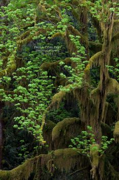 The Mossy Tree by La-Vita-a-Bella