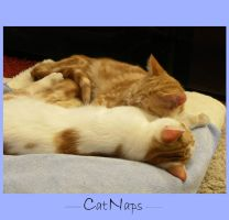 CatNaps by Buble