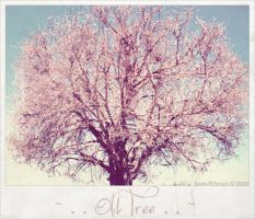 . . Old Tree . . by Samt-al7anyin