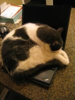 Adobe Laptop 4 by cat-lovers