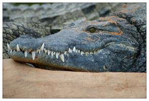 Croc Two by CptCapricious