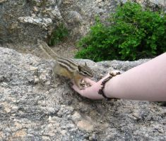 A Chipmunk in Hand... by Tranquil-Insanity