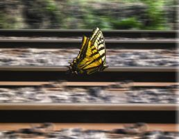 Panning Butterfly by Teh-Ringmaster