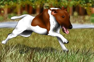 Smooth Fox Terrier on the Run by WolfScribe