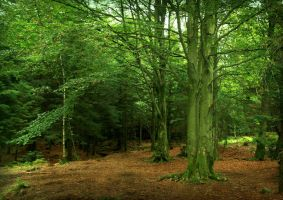 Leaving the Beeches by Navanna