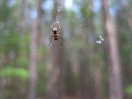 Mister Spider in His Web by Rachelgravesart