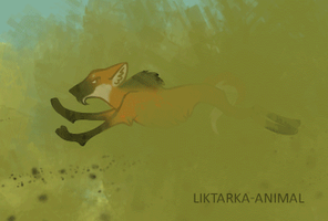 Go.gif by Liktarka-animal
