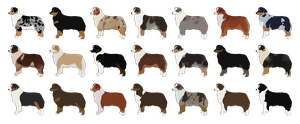 Australian Shepherd Adopts - SOLD Help Save a Dog! by xMush-Kennelsx