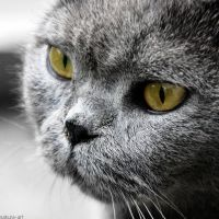 yellow eyes by Tattoomaus78