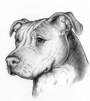 Tigger the APBT by rgyoung