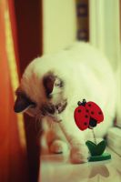 Me and the ladybug 1 by WorldInPictures
