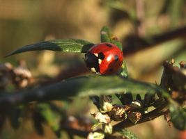 13. ladybird by littleconfusion