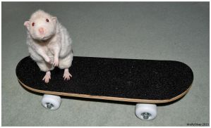 Skater Rat by wolfysilver