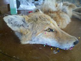 red coyote wip mount 4 pic 2 by LittleWolfPaw