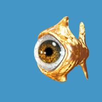 big eye goldfish by inmc