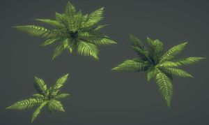 Sword Ferns by samdrewpictures