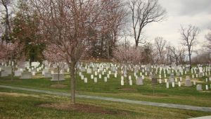 Arlington Cemetery stock by ali-is-colourful