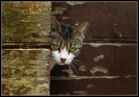 Curiosity by kanes