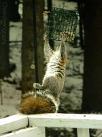 The Adventurous Squirrel by Champineography