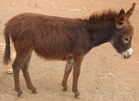 Baby Donkey 1 by Spiteful-Pie-Stock