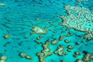 Great Barrier Reef by Questavia