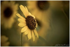 Wild Sunflowers In Retro by kkart