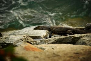Komodo Dragon Lizard 1 by sarthahirah