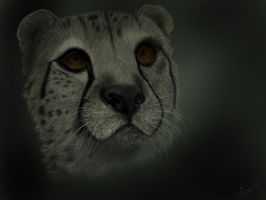 Cheetah by house89