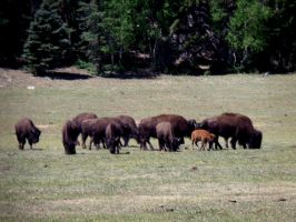 Yellowstone, WY by mzager