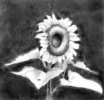 The Sunflower of... Sunflowers by Goldencloud